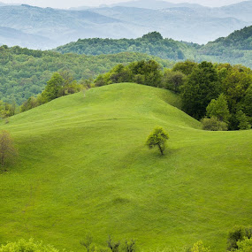 The green aria. by George Nicoloiu - Landscapes Mountains & Hills ( wild, hills, green, forest, landscapes )