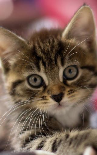 小貓動態壁紙 個人化 App-癮科技App
