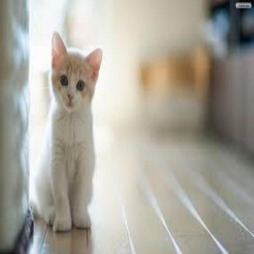 kedi resimler