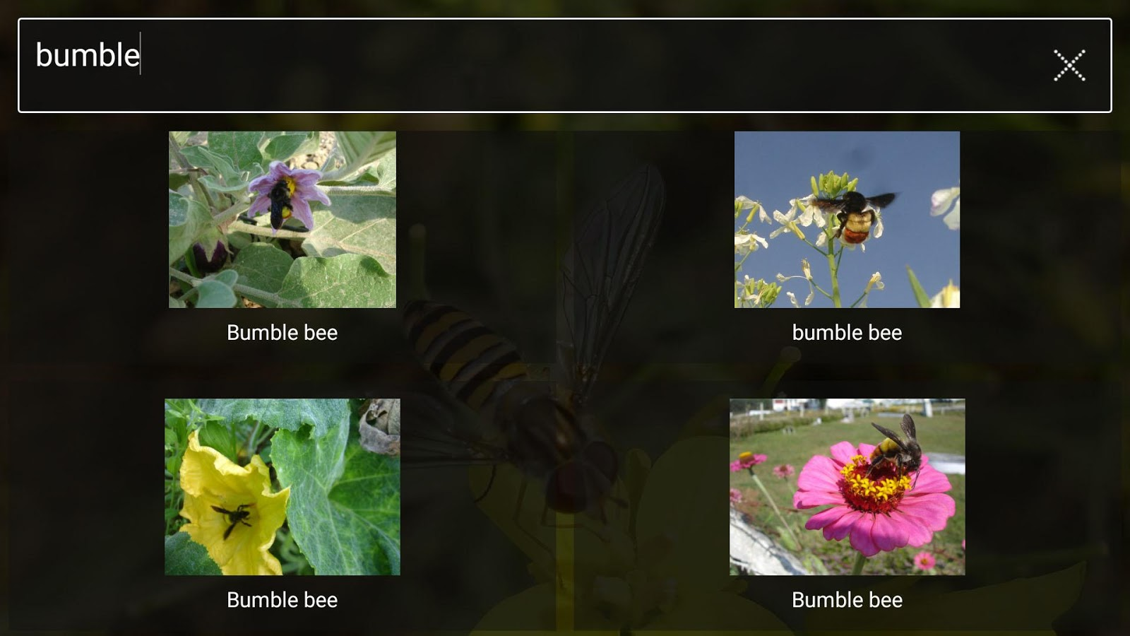 Pollinators- screenshot