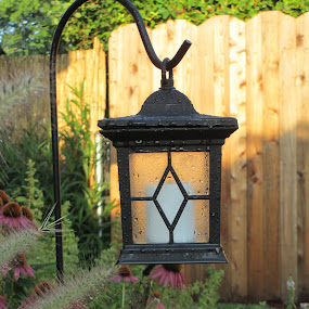 Lantern Dew by Tanya Washburn - Flowers Flower Gardens