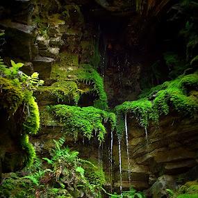 Mossy Mountainside  by Beth Phifer - Landscapes Mountains & Hills ( mountain, green, lush, moss, lichen, fern, drips, dripping, drops, wet, rock formation, rocks, rain )
