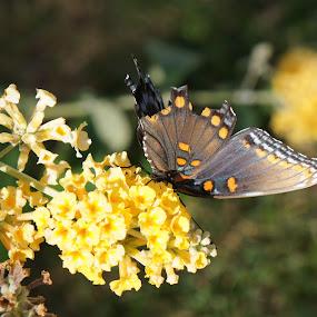 Fall season by Iggy - Flowers Flowers in the Wild ( butterfly, fall, flower )