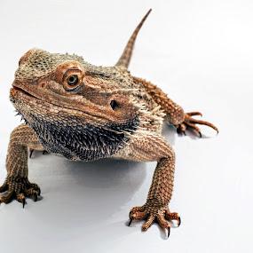 by John Bonanno - Animals Reptiles