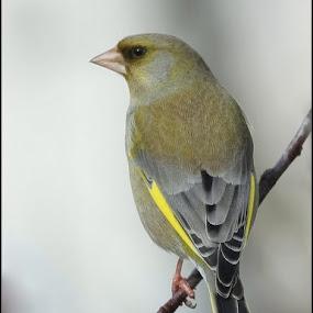 beauty by Ld Turizem - Animals Birds