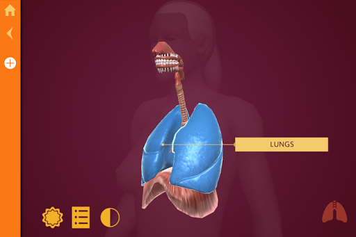 Anatomy - The Human Body