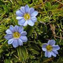 Flor de los Andes