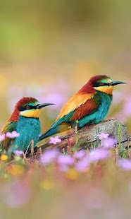 Ptactvo Živá Tapeta - náhled