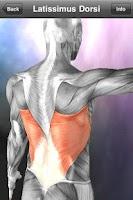 Screenshot of Learn Muscles: Anatomy