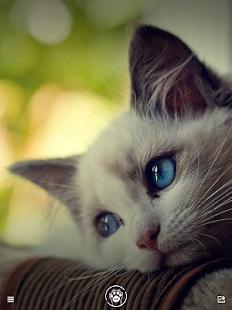 Purr Cat - Pics Wallpapers