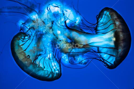 Image of: Drawings By Viks Pix Animals Sea Creatures Over Jellyfish Edited Cool Pixoto Sea Creatures Animals Pixoto