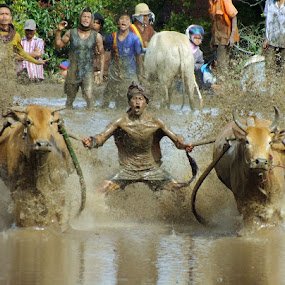 yahooooo... by Romi Febrianto - Sports & Fitness Rodeo/Bull Riding ( field, sports, cow, traditional )