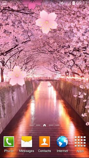櫻花動畫壁紙