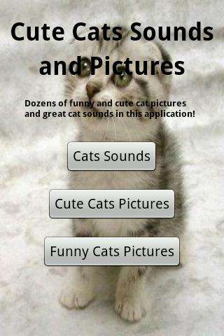 Cats Sounds- screenshot