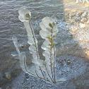 Frozen Desert Plants