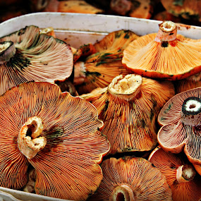 Forest Mushrooms by Tamsin Carlisle - Food & Drink Ingredients ( ingredients, raw, wild, food, turkey, gills, edible, mushrooms,  )
