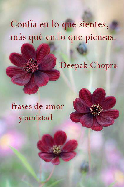 FRASES AMOR Y AMISTAD WHATSAPP - screenshot