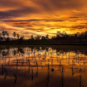 Reflection on Golden Hour by Randi Pratama M - Landscapes Waterscapes ( field, reflection, indonesia, sunset, golden hour,  )