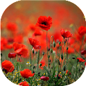 Poppies live wallpaper icon