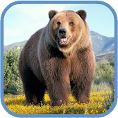 Grizzly HD. Live Wallpaper