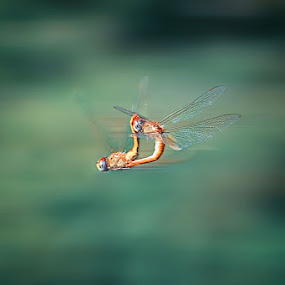 speed of love by Casper Prie - Animals Insects & Spiders