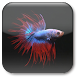 Betta Fish Live Wallpaper ★ icon