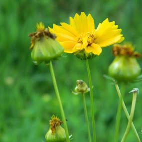 Nature! by Nisha Kumari - Flowers Single Flower (  )