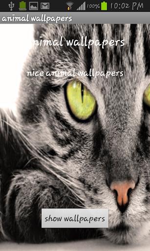 玩攝影App|9- Animals wallpaper 2014免費|APP試玩