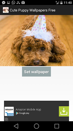 玩漫畫App|Cute Puppy Wallpapers HD免費|APP試玩