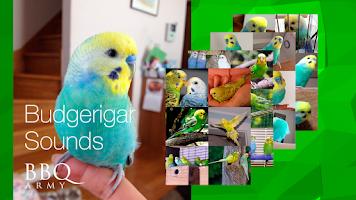 Screenshot of Budgerigar Sounds for Parakeet