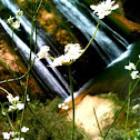 Waterfall to Flower