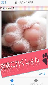 Cat paws Photo collection screenshot 3