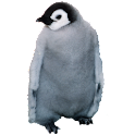 Emperor Penguin Sticker icon