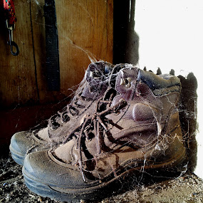 Cobwebs On Boots   by Tom Carson - Artistic Objects Still Life ( shoes, old, cobweb, died, dirty, spider, unused, dead, boots, dusty, abandoned )