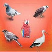 Birds Sounds
