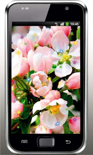 Apple Blossoms live wallpaper