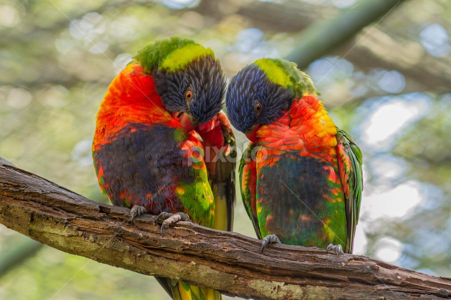 by Steve Kyle - Animals Birds ( bird, tropical, bird of paradise )