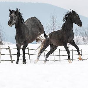 51_IMG_7153_horses_Carla Coanda.jpg