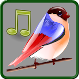 Birds Sounds Relax and Sleep file APK Free for PC, smart TV Download