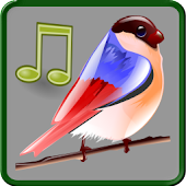 Birds Sounds Relax and Sleep APK for Bluestacks