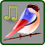 Birds Sounds Relax and Sleep 1.2 APK for Android