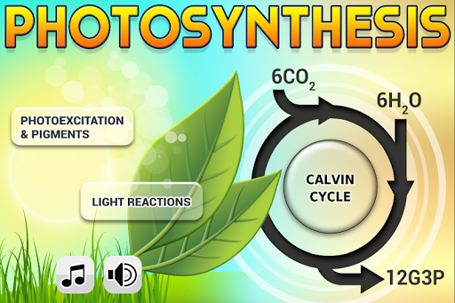 Biology Photosynthesis L
