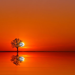 simply red by Fernando Ale - Landscapes Sunsets & Sunrises ( water, tree, lake, sun,  )