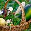 by Alexa Bessler - Food & Drink Fruits & Vegetables (  )