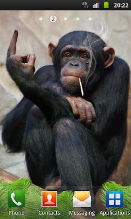 Funny Monkey Live Wallpaper 1.2.1 screenshot 322691