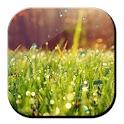 Galaxy S4 Rain n Grass LWP logo
