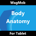 Human Body Anatomy for Tablet