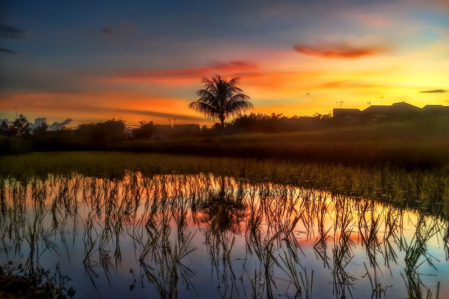 COconut Reflection by Randi Pratama M - Instagram & Mobile Android ( reflection, tree, coconut, indonesia, sunset,  )