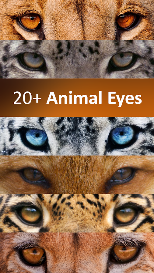 InstaEyesPic - Animal Eyes - screenshot