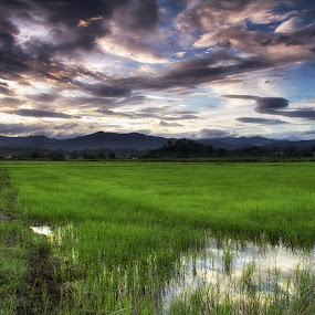 Paddy Field by BRYON PHILIP - Landscapes Prairies, Meadows & Fields ( field, paddy, green, sunrise, landscape )